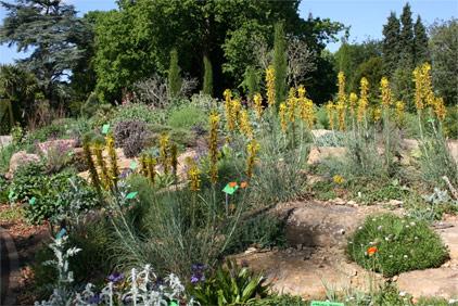 European Mediterranean Region at Bristol University Botanic Garden